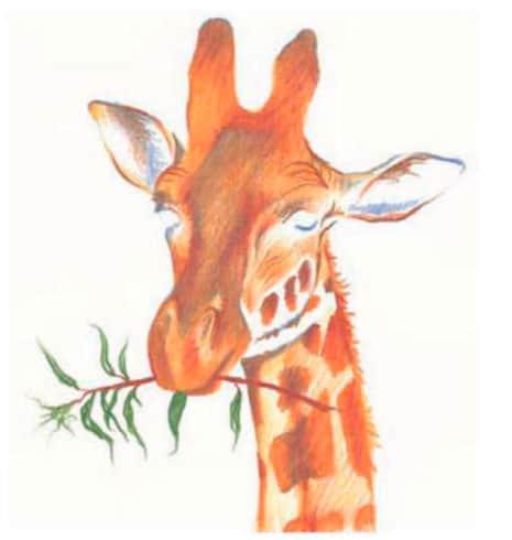 как-нарисовать-жирафа-цветными-карандашами1