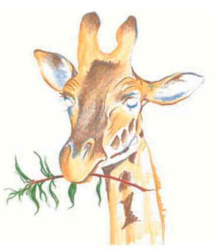 как-нарисовать-жирафа-цветными-карандашами2