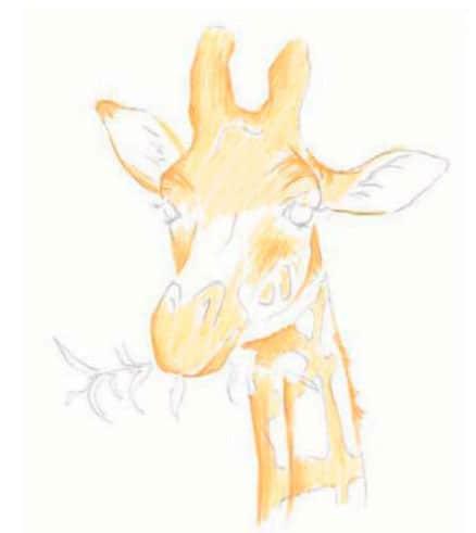 как-нарисовать-жирафа-цветными-карандашами5