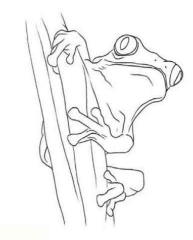 как-нарисовать-лягушку-цветными-карандашами