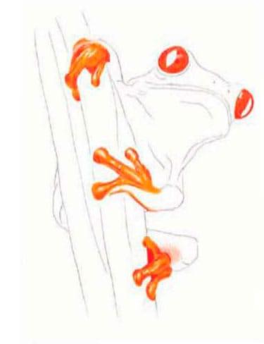 как-нарисовать-лягушку-цветными-карандашами1