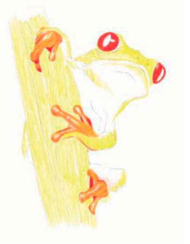 как-нарисовать-лягушку-цветными-карандашами2