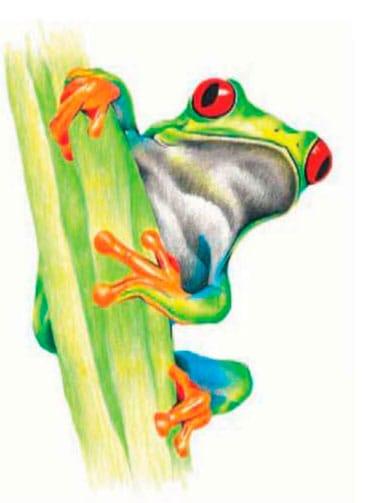 как-нарисовать-лягушку-цветными-карандашами4