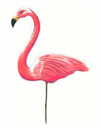 как-нарисовать-фламинго-цветными-карандашами2