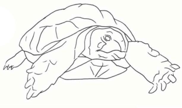Курс рисования цветными карандашами. Черепаха