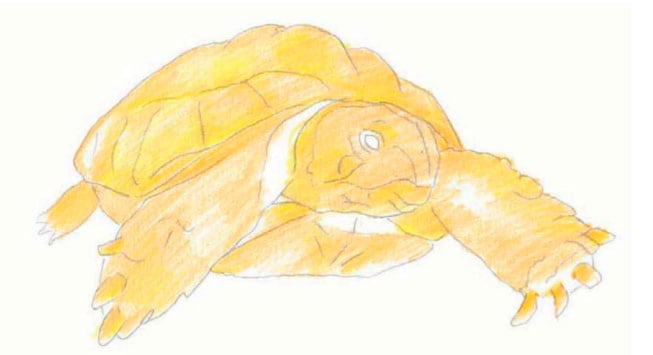 как-нарисовать-черепаху-3