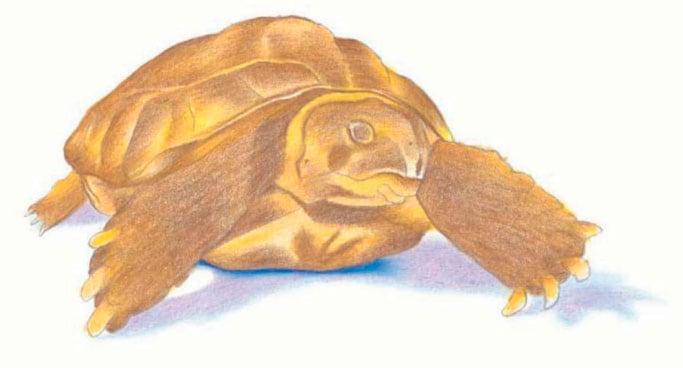 как-нарисовать-черепаху-5