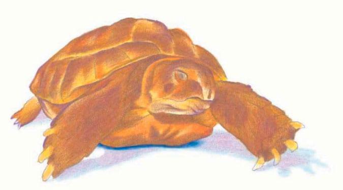 как-нарисовать-черепаху-6