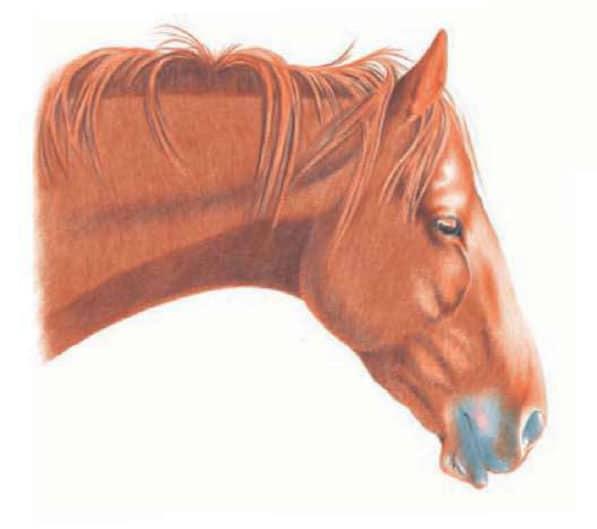 Курс рисования цветными карандашами. Лошадь