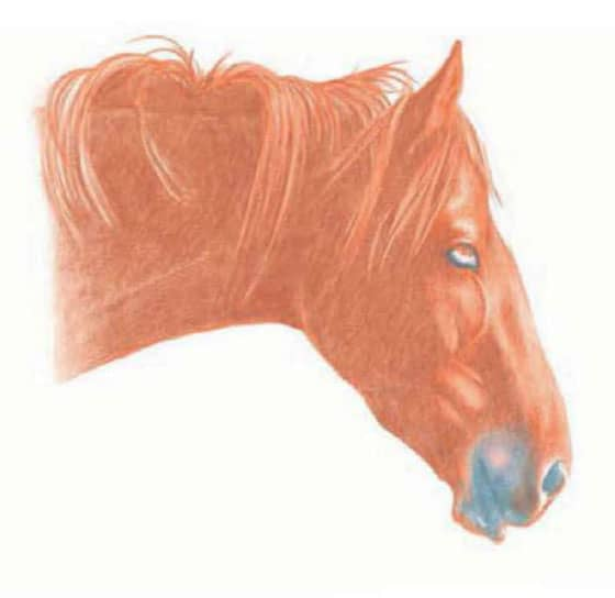как-нарисовать-лошадь-цветными-карандашами2
