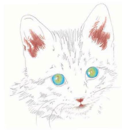 как-нарисовать-котенка2jpg