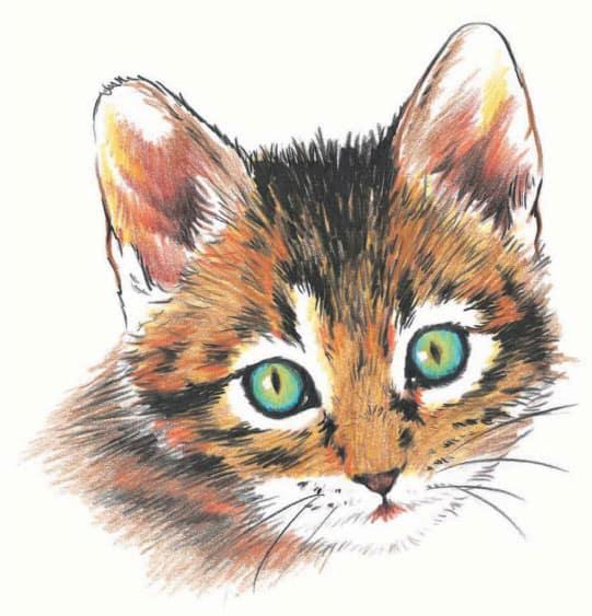 как-нарисовать-котенка7