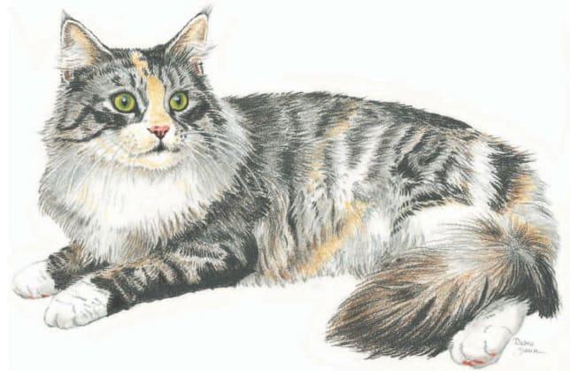 как нарисовать кошку поэтапно (7)