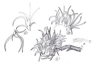 как рисовать собственные танглы (4)