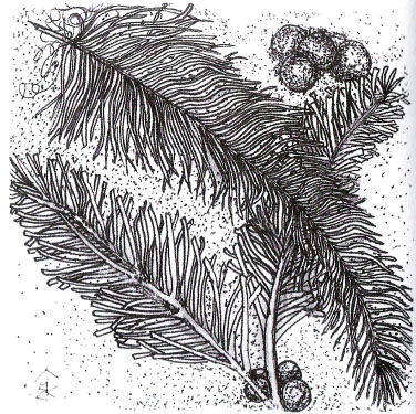 Что удивительно, при рисовании перьев никогда не получаются два одинаковых.