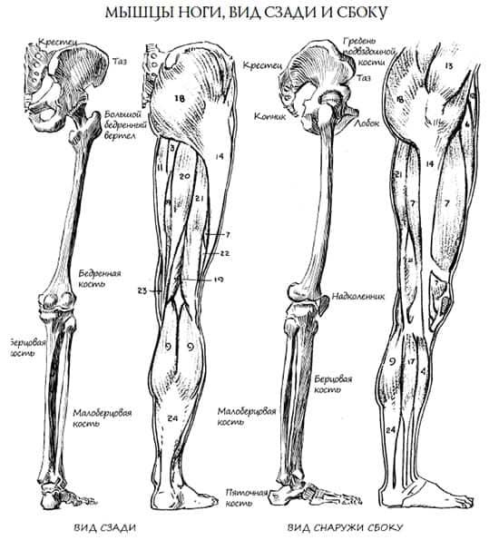 Как рисовать ноги и стопы? Анатомия ног человека.