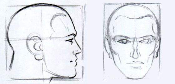 голова-в-профиль-и-анфас