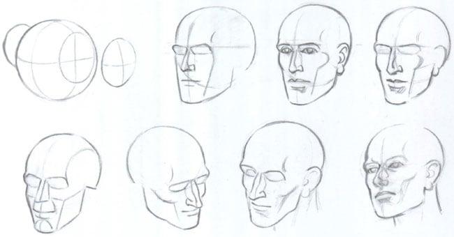 голова-в-разных-ракурсах