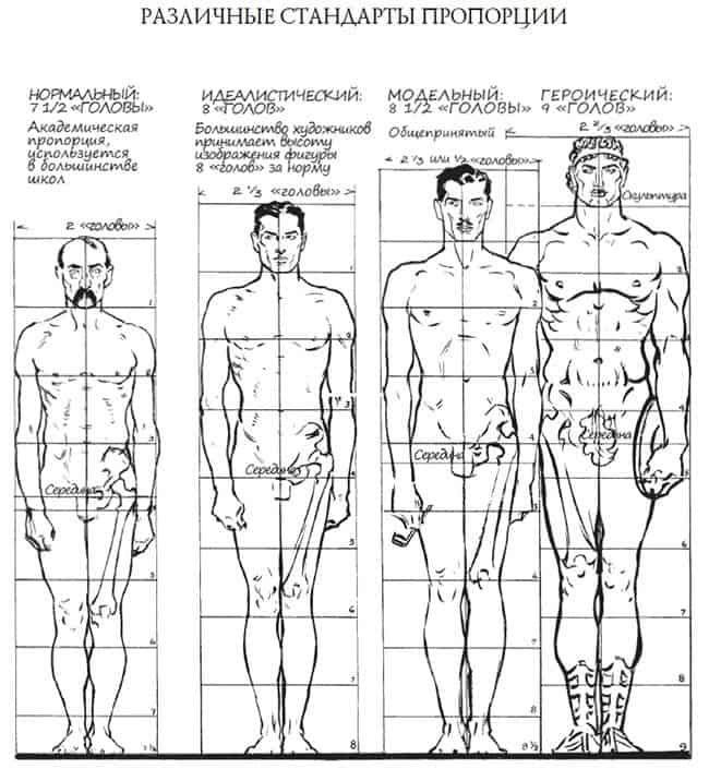 различные стандарты пропорции фигуры