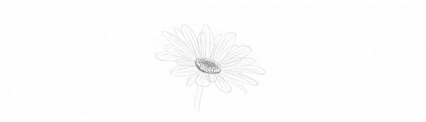 kak-narisovat-romashku-karandashom-19