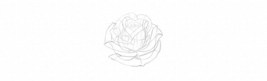 kak-narisovat-rozu-19