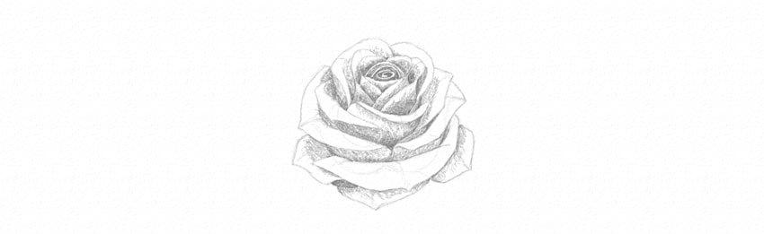 kak-narisovat-rozu-22