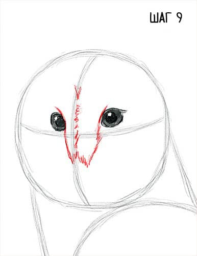 Как нарисовать сову сипуху?