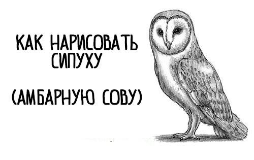 kak-narisovat-sovu-sipuxu